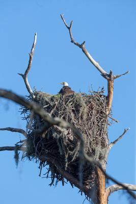 Nest at Cedar Point 2016