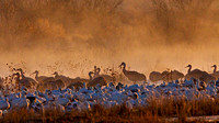 Snow Geese and Cranes in Mist, Bosque de Apache, New Mexico