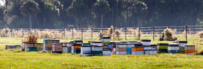 Honey_Bee_Hives_at_Babcock_Ranch